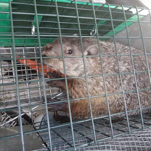 Groundhog Control